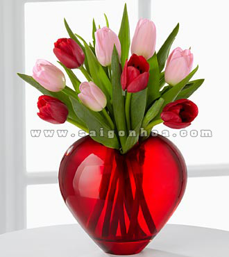 binh hoa tulip Valentine