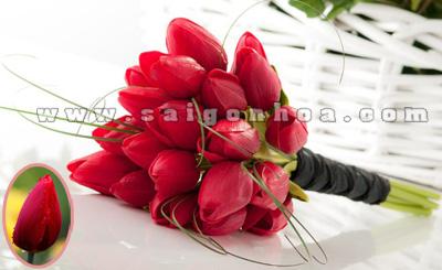 bo hoa tulip mau do tuoi