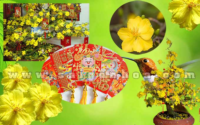 cay hoa mai trang tri mat tien toa nha11