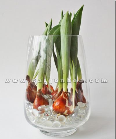 cu hoa tulip 4