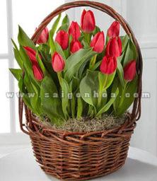 Gio Hoa Tulip Do 1