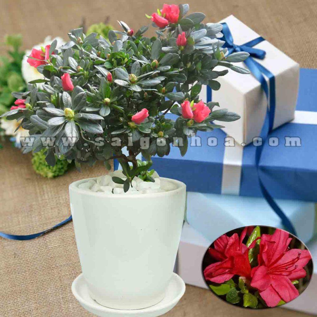 hoa do quyen do 4
