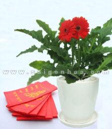 Hoa Dong Tien Ngay Tet 7