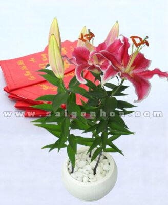Hoa Lily Tet Dai Dien