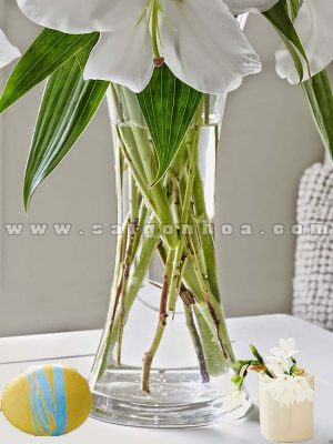 Hoa Lily Trong Nuoc 5