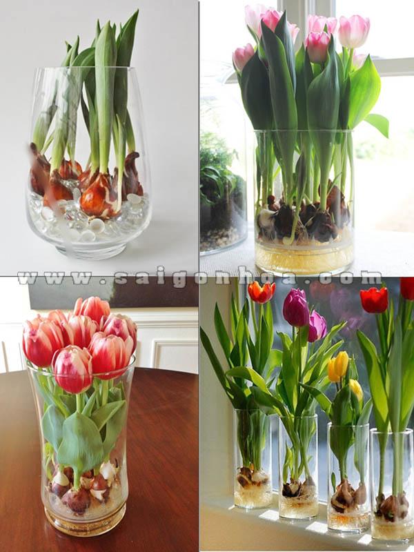 hoa tulip co cu trong chau thuy tinh