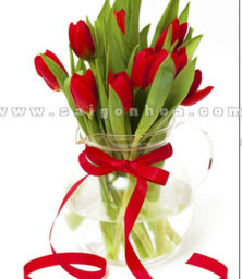 Hoa Tulip Do