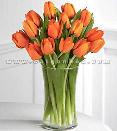 hoa tulip mau cam 11