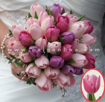 hoa tulip mau hong hoa cuoi