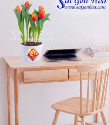 Hoa Tulip Ngay Tet