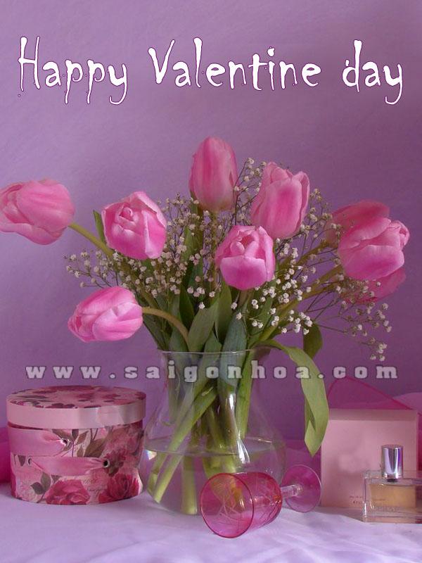 hoa tulip valentine