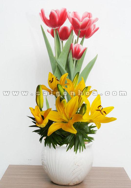 Tieu Canh Hoa Lily 1
