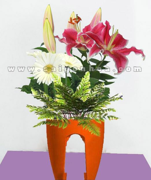Tieu Canh Hoa Lily 2
