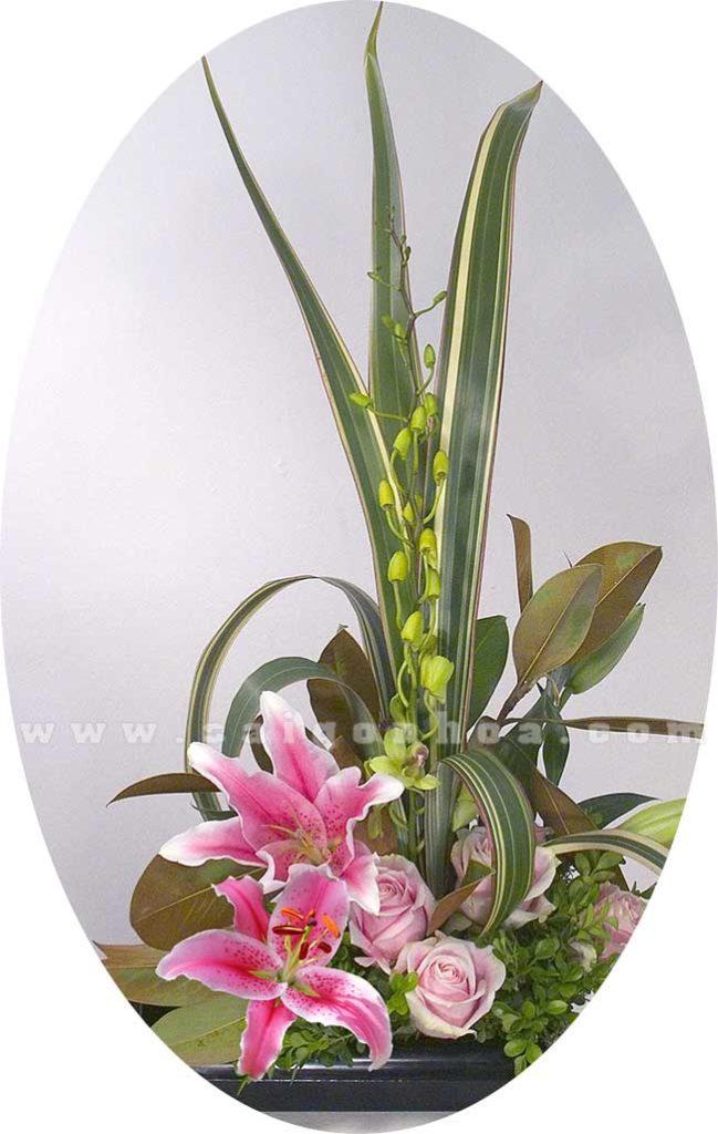 Tieu Canh Hoa Lily 3