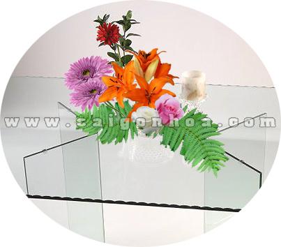 Tieu Canh Hoa Lily 4