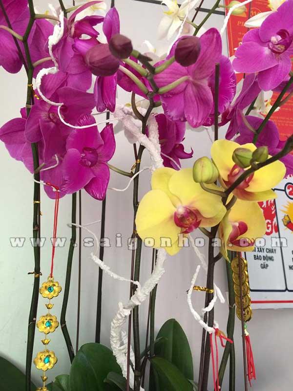 Chau Lan Ho Diep 2