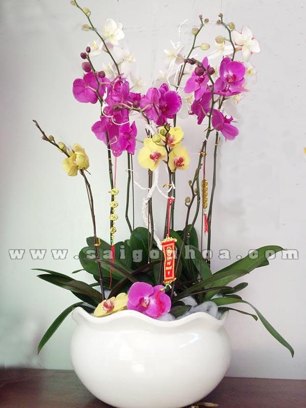 Chau Lan Ho Diep 3