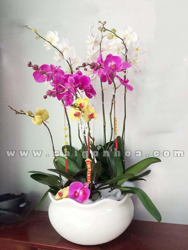 Chau Lan Ho Diep 7