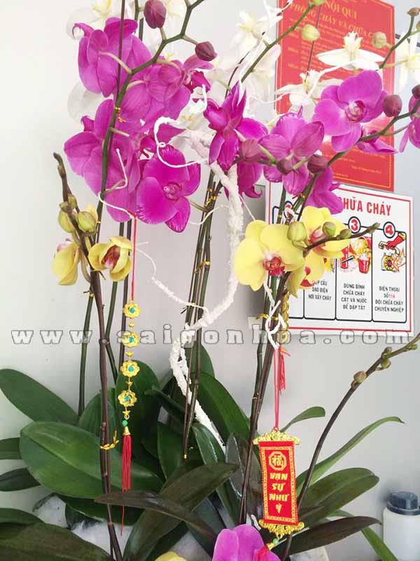 Chau Lan Ho Diep 8