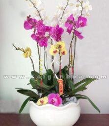 Chau Lan Ho Diep 9