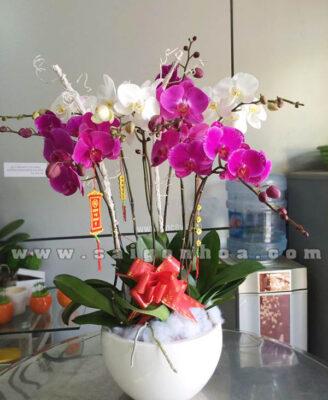 Chau Lan Ho Diep Ngay Tet 5