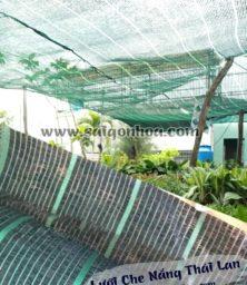 Luoi Che Nang Thai Lan 3