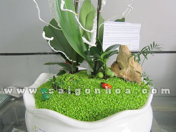 Tieu Canh May Man Dan Buom Trang 2 Canh 3