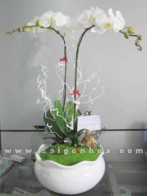 Tieu Canh May Man Hoa Lan Ho Diep