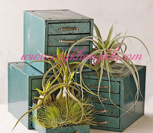 air plant display