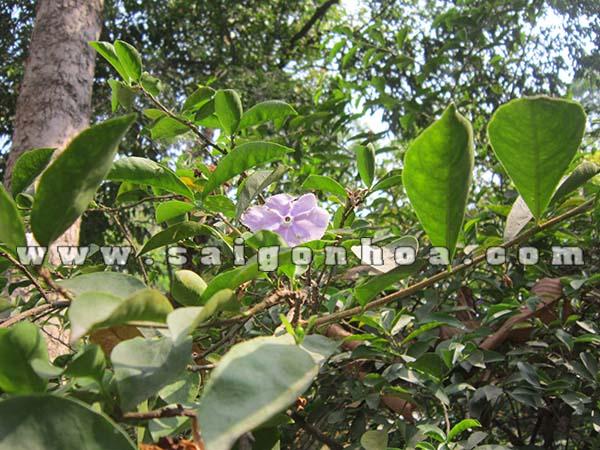 Canh La Hoa Cay Lai Nhat