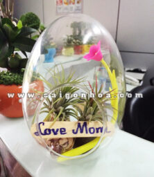 Cay Khong Khi Love Mom