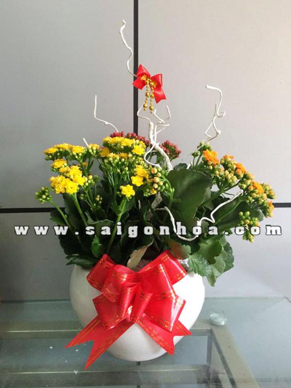 hoa sống đời quà tặng