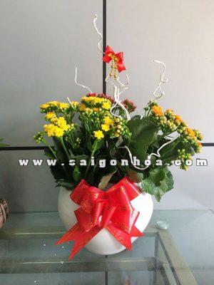 chau hoa song doi