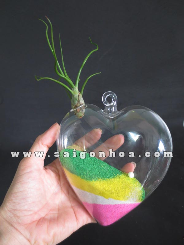 tillandsia in glass