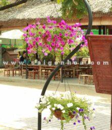 Cay Hoa Da Yen Thao Hong Chau Treo
