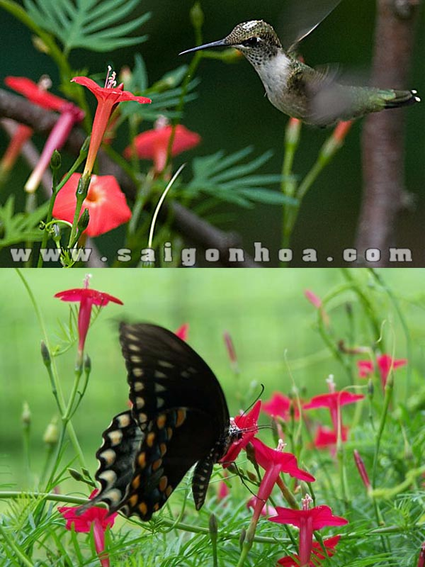 Day Toc Tien Thu Hut Chim Va Buom