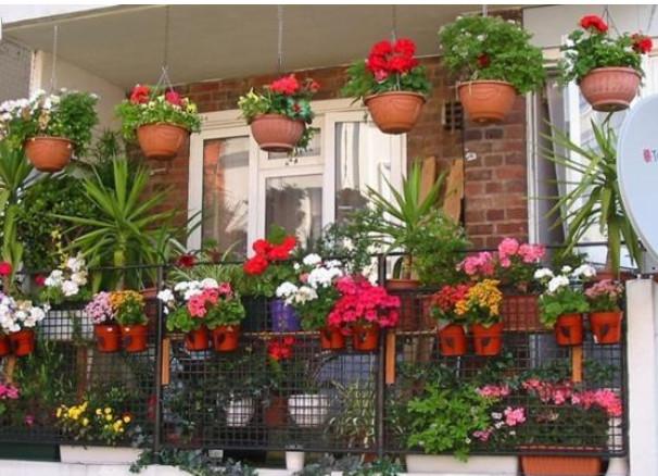 Sự kết hợp hoàn hảo của cây và hoa biến ban công thành khu vườn treo