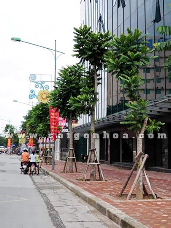 Hang Cay Lat Hoa Tren Duong Pho