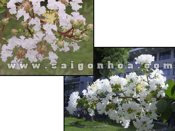 hoa tuong vi trang