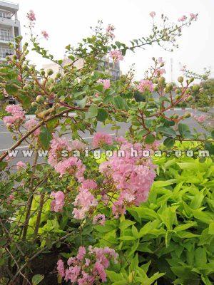 hoa va la cay tuong vi