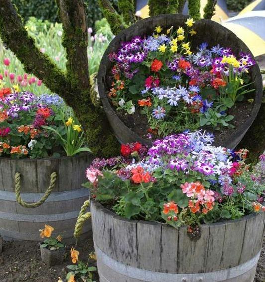 Trồng hoa trong thùng gỗ cũ