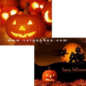 bi ngo le halloween