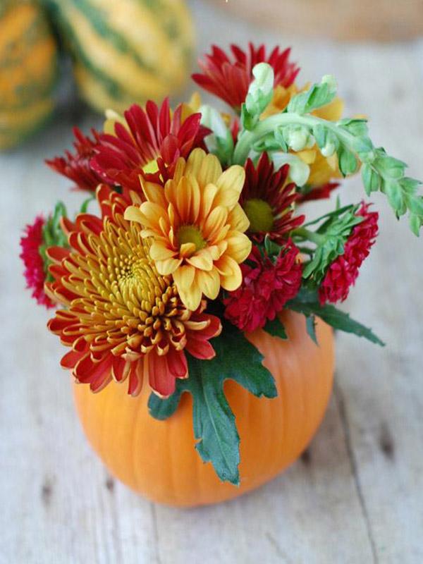 cam hoa Halloween - Trang trí hoa cúc cho sân vườn, nhà ở ngày halloween
