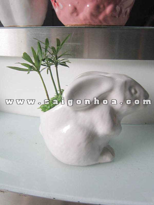 cay may man tung hanh phuc chau con tho de ban