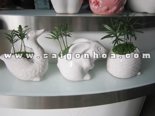 cay may man tung hanh phuc chau con vat