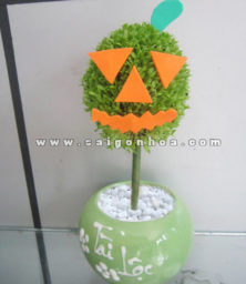 Chau Cay May Man Qua Cau Bi Ngo Halloween