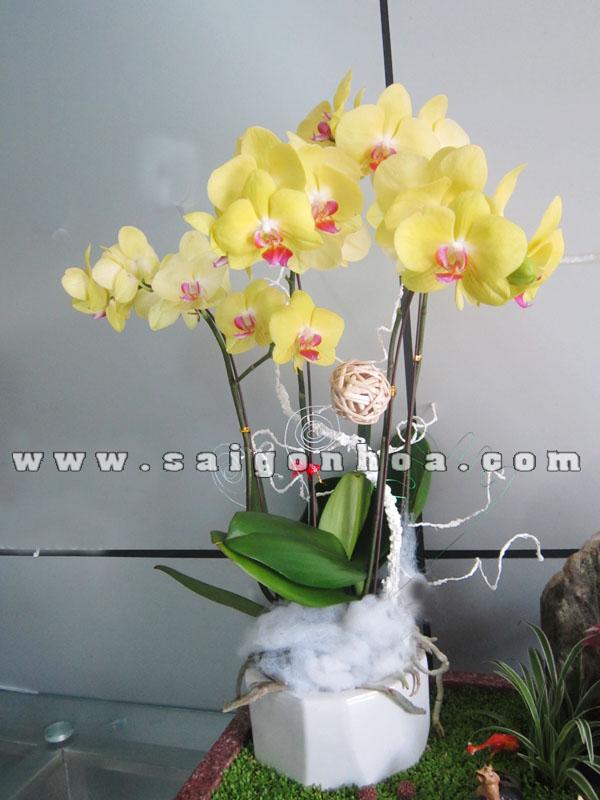 chau hoa lan ho diep vang trong tieu canh