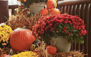 Hoa Cuc Va Bi Ngo Trang Tri Ngay Halloween