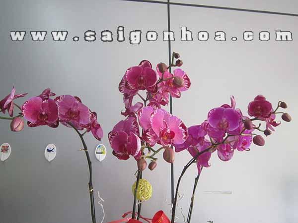 Lan Ho Diep 7