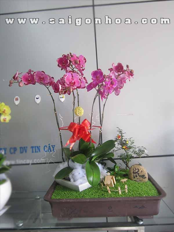 Lan Ho Diep Tim 2